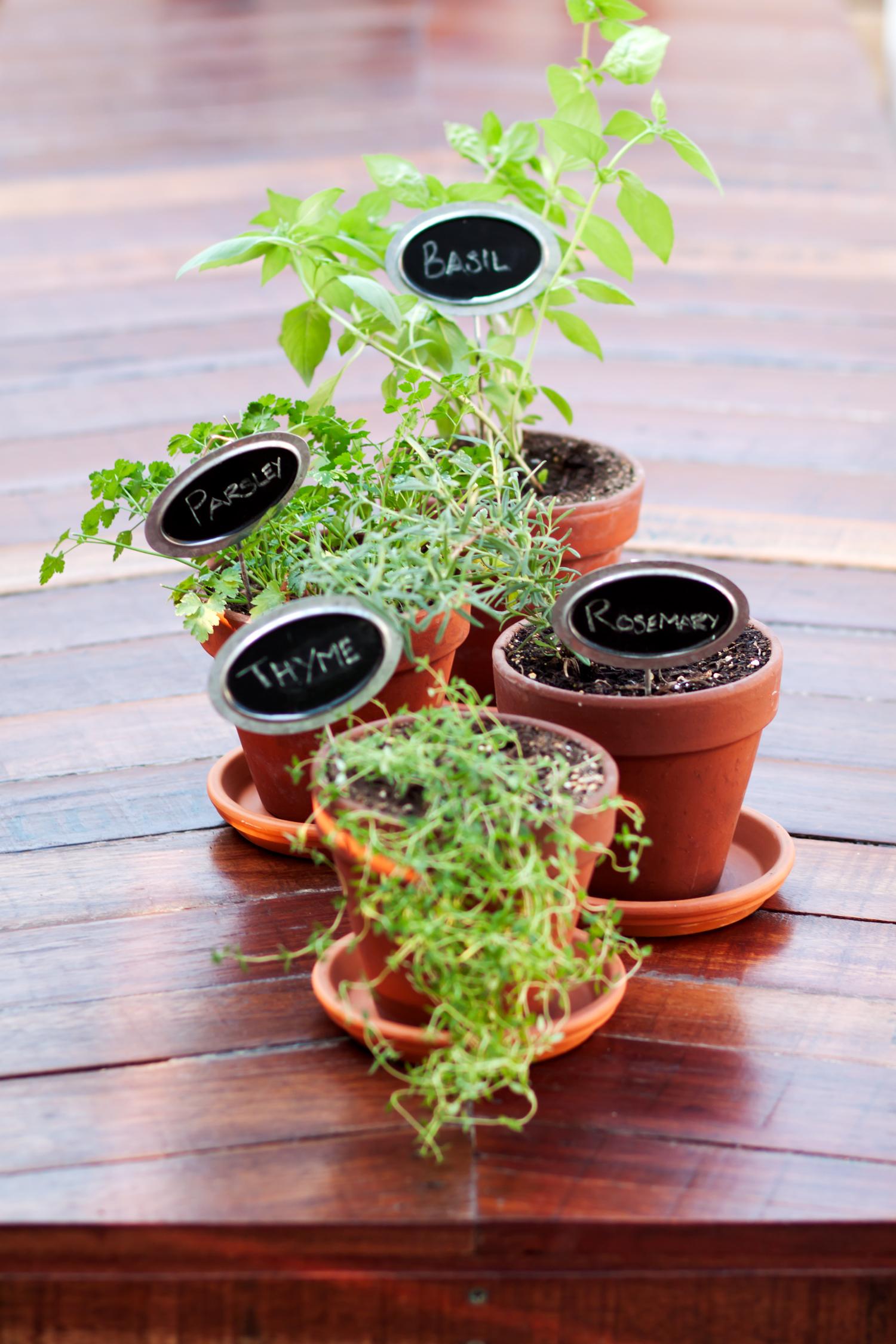 herbs_1